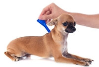 Picture for category Flea & Tick Treatment