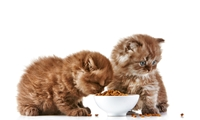 Picture for category Cat Dry Food
