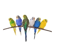 Picture for category Bird Food