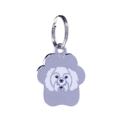 Picture of TAG RAINBOW SHORT HAIR MALTESE