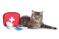 Picture for category Cat First Aid
