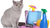 Picture for category Cat Cleaning & Disinfection