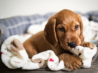 Picture for category Puppy Essentials